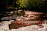 North Fork Cherry Fallen Leaves in Pools tb10082a