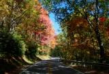 Autumn Colors CC Rd Scene tb10081h