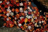 Fall Leaves Floating among Stones tb1008