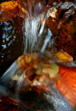 Lil Falls Splash of Color v tb10081d