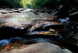 Twisting Swifts Early Fall River Scene tb10081b