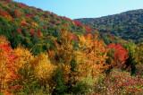 Sugar Creek Fork Sunny Fall Colors tb10081h