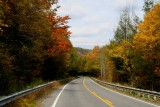 North Fork Rd Fall Colors Scene tb10086a