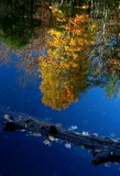 Cranberry River Reflection with Log v tb11082f