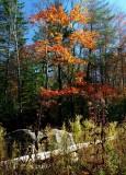 Rock Log Fall Colors Upper Williams v tb11085h