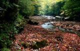 North Fork Cherry Early Fall tb10081b