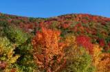 Sunny Fall Colors Sugar Creek Hill tb10081n