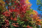 Autumn Wall of Color CC Rd tb10081e