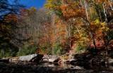 Late Autumn Colors Upper Williams River tb11085i