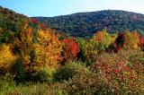 Sugar Creek Fall Valley Colors rdx tb10082f