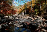 Fall South Fork Cherry Stream Bed tb11086f