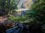 Mixed Fall Foliage Lower Williams tb11088erx.jpg