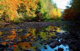 Williams River Basin Autumn Relections arx.jpg