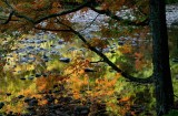 Maple Tree Colors by Wills River tb10085brx.jpg
