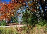 Large Oak by Bruffey Field Fall Scene tb11086br.jpg