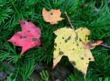 Few Early Fall Colors in App Mtns tb0917bmr.jpg