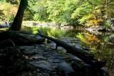 Bright Fall Scene Mid Williams River tb0917rx.jpg