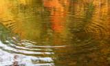 Ripples in Stream Pool Fall Reflection tb0928ndx.jpg