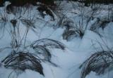 Snow Pack Bending Brush in Semi-Circles tb0111lcr.jpg