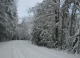 Cranberry Glades Rd Wintry Timber and Sky tb0111lerx.jpg
