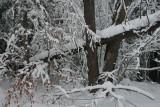 Snowy Woodland Winter Scape Cranberry Mtn tb0111lpr.jpg