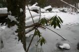 Icy North Cherry Timber and Stream Scene tb0211kvr.jpg