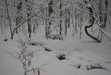 Snow Bound Headwaters Hinkle Mtn Stream tb0211kur.jpg
