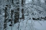 Frosted Mtn Ridge Standing and Fallen Timber tb0211lpr.jpg