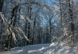 Archway into Sunlit Appalachian Winter tb0211hcr.jpg