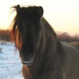 Paarden en ponies