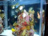 A colorful aquarium adorns the cafe.