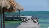 Pelicans taking a break on the dock.