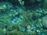 I went snorkeling at Ambergris Caye and saw some beautiful coral.