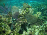 The Belize Coral Reef is the second largest coral reef in the world.