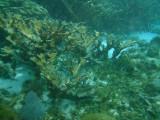 More coral shots.