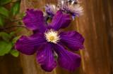 teresa flower 2