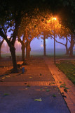 Fog 12/01/2008