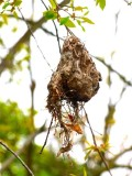 Wasps Nest?