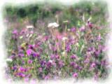 Wildflowers - Painting