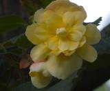 Yellow Gem.jpg