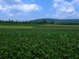 Hegins Farm