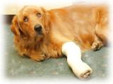 Bellas Broken Leg Painting