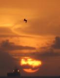 sunset-Antigua
