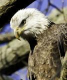 Eagles Maryland 2010