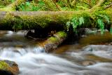 Oregon Creek