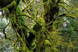 Greens of a Rainforest