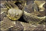 R-Snake 5