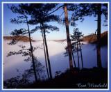 Pine Vista
