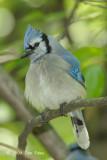 Jay, Blue @ Central Park, NY