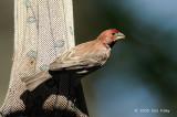 Finch, House @ Central Park, NY
